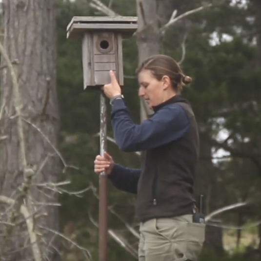 Student installing a bird box
