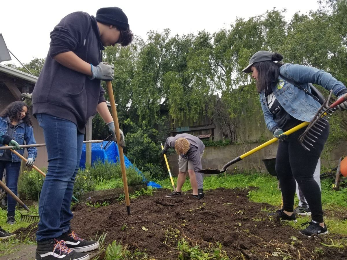 Students working in a garden