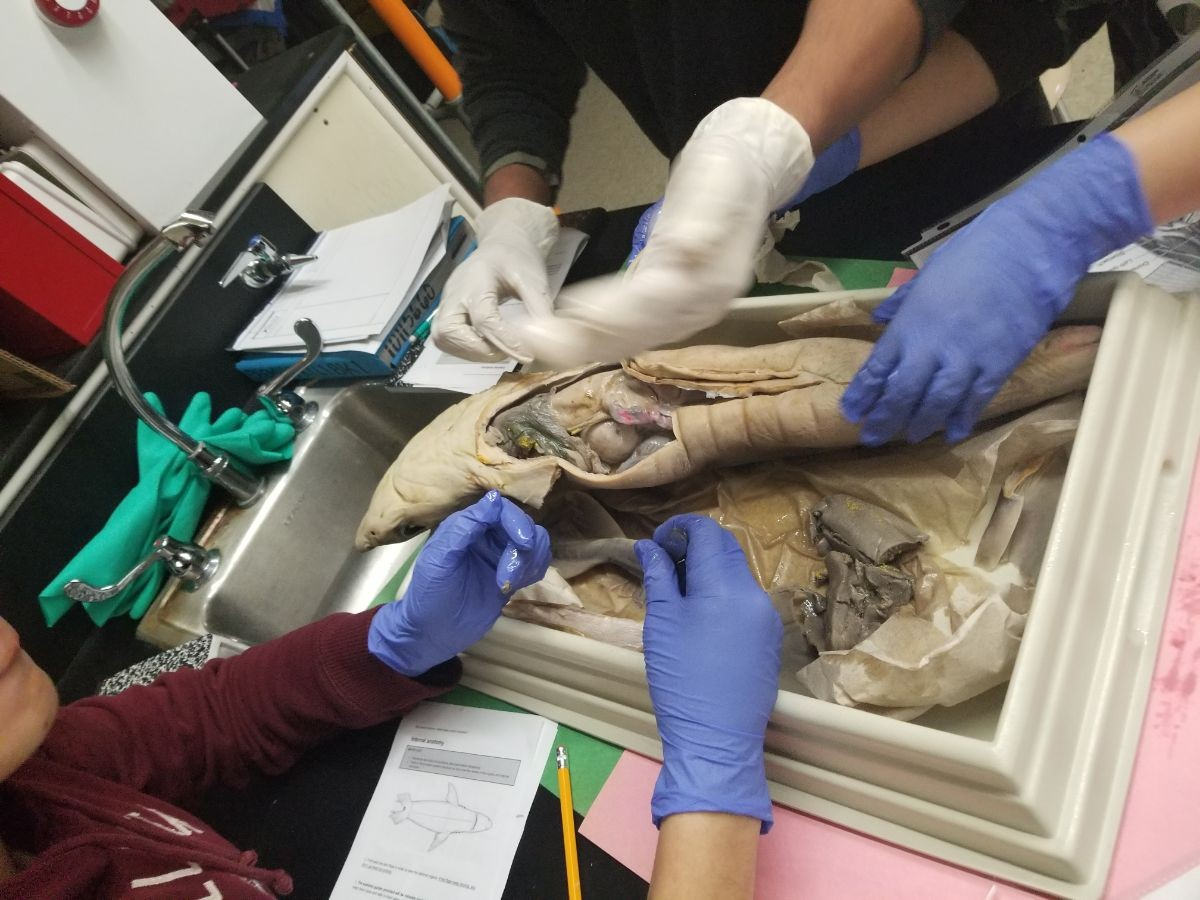 Three students take a closer look at what is inside the shark.