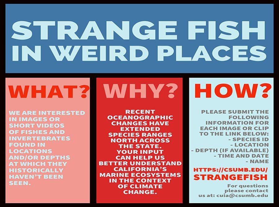 Strange Fish flyer