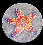 seastar image