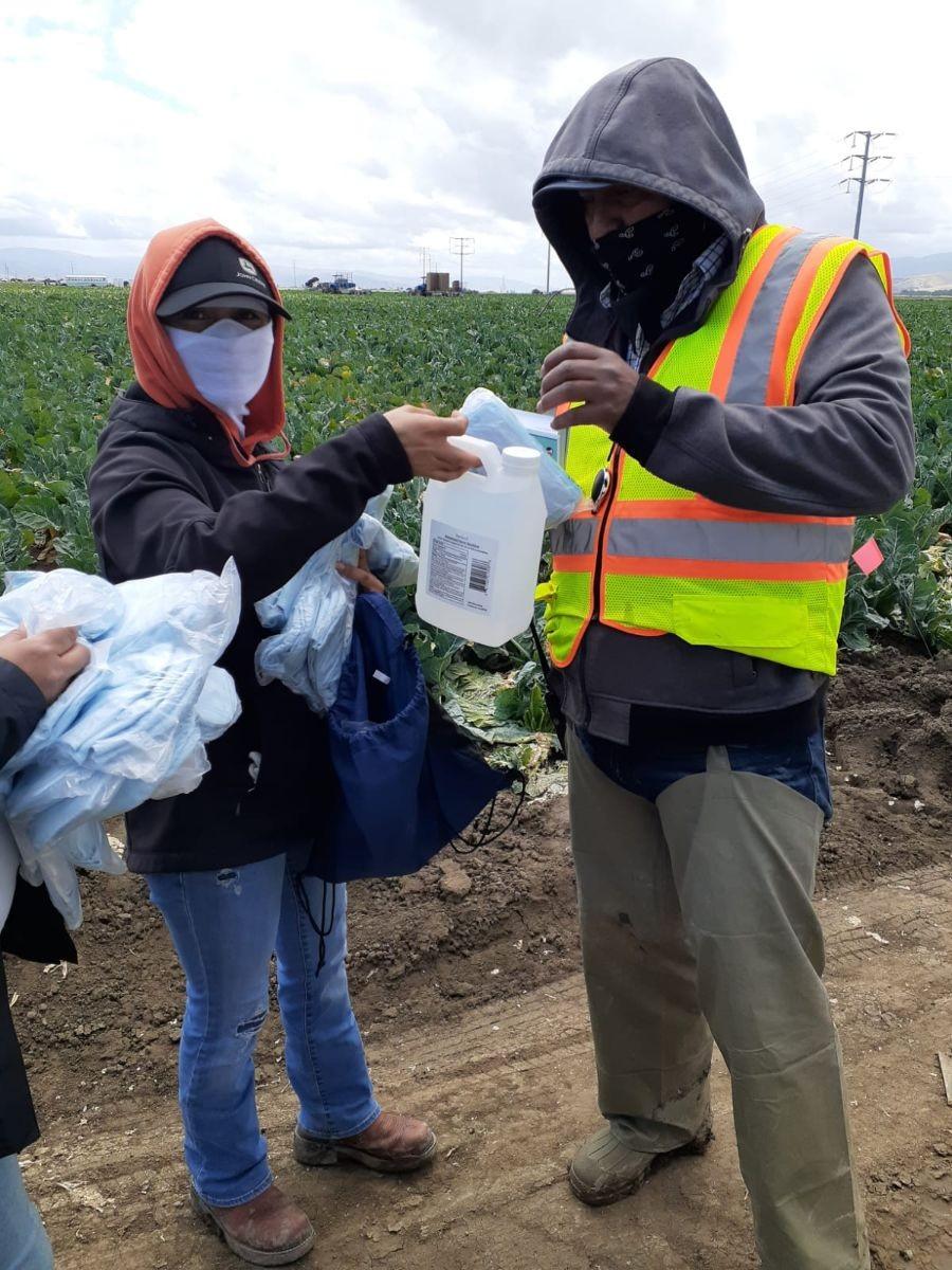 Photo: Farmworkers in a field wearing masks