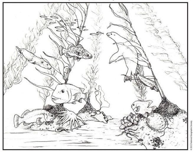 kelpforest cartoon