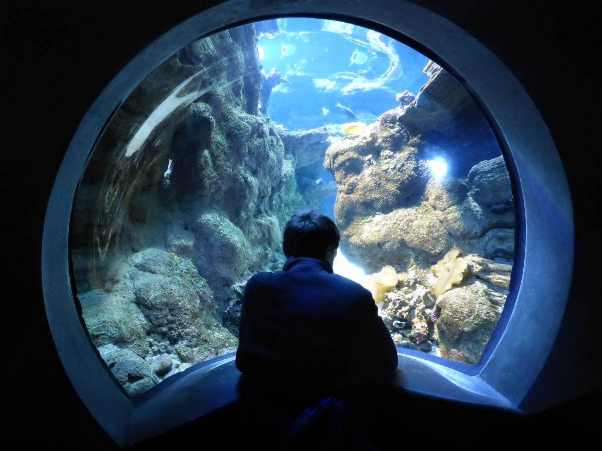 Student stares at an underwater environment through the window.