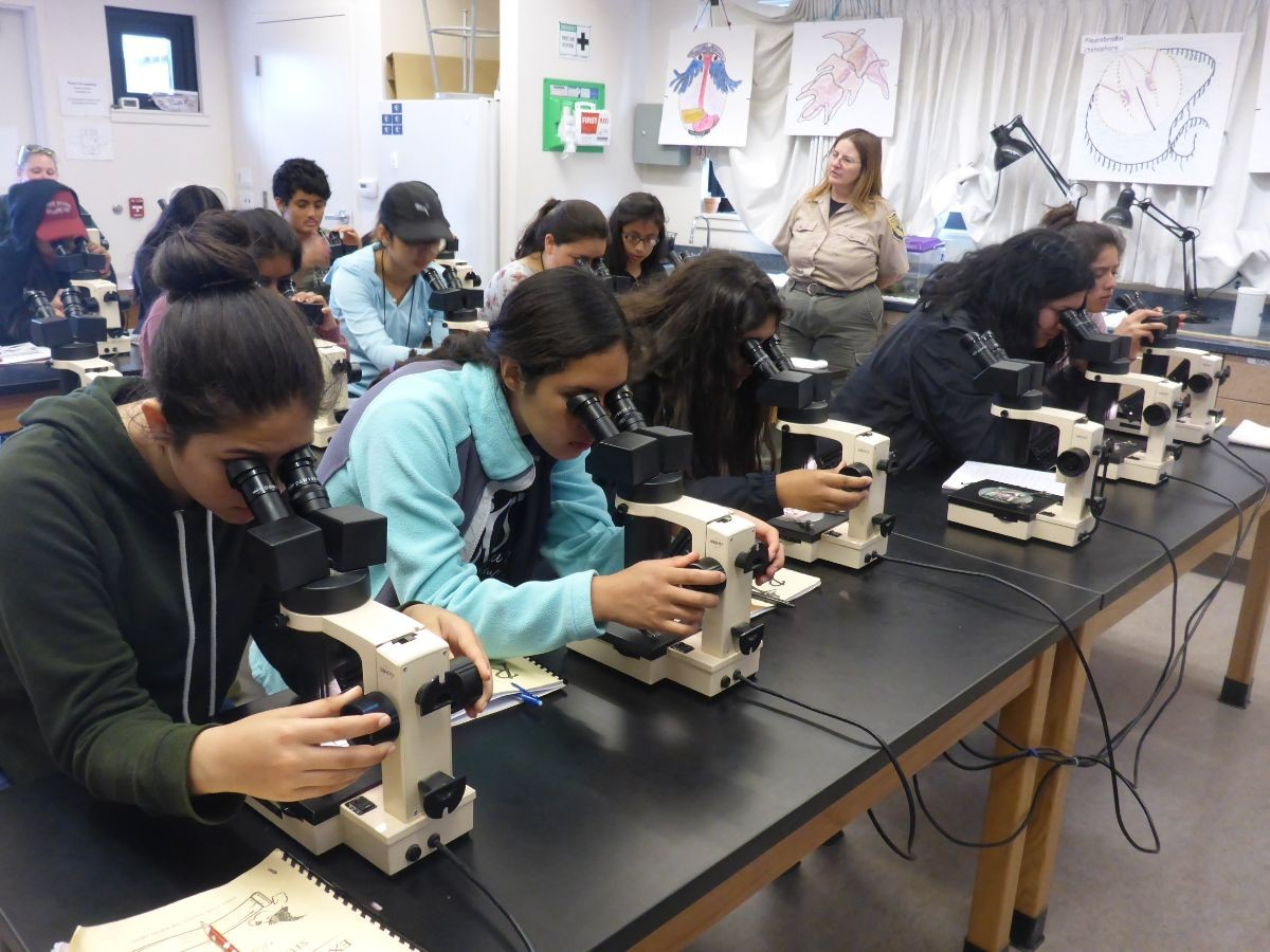 Students get a closer look using microscopes to see small organisms.