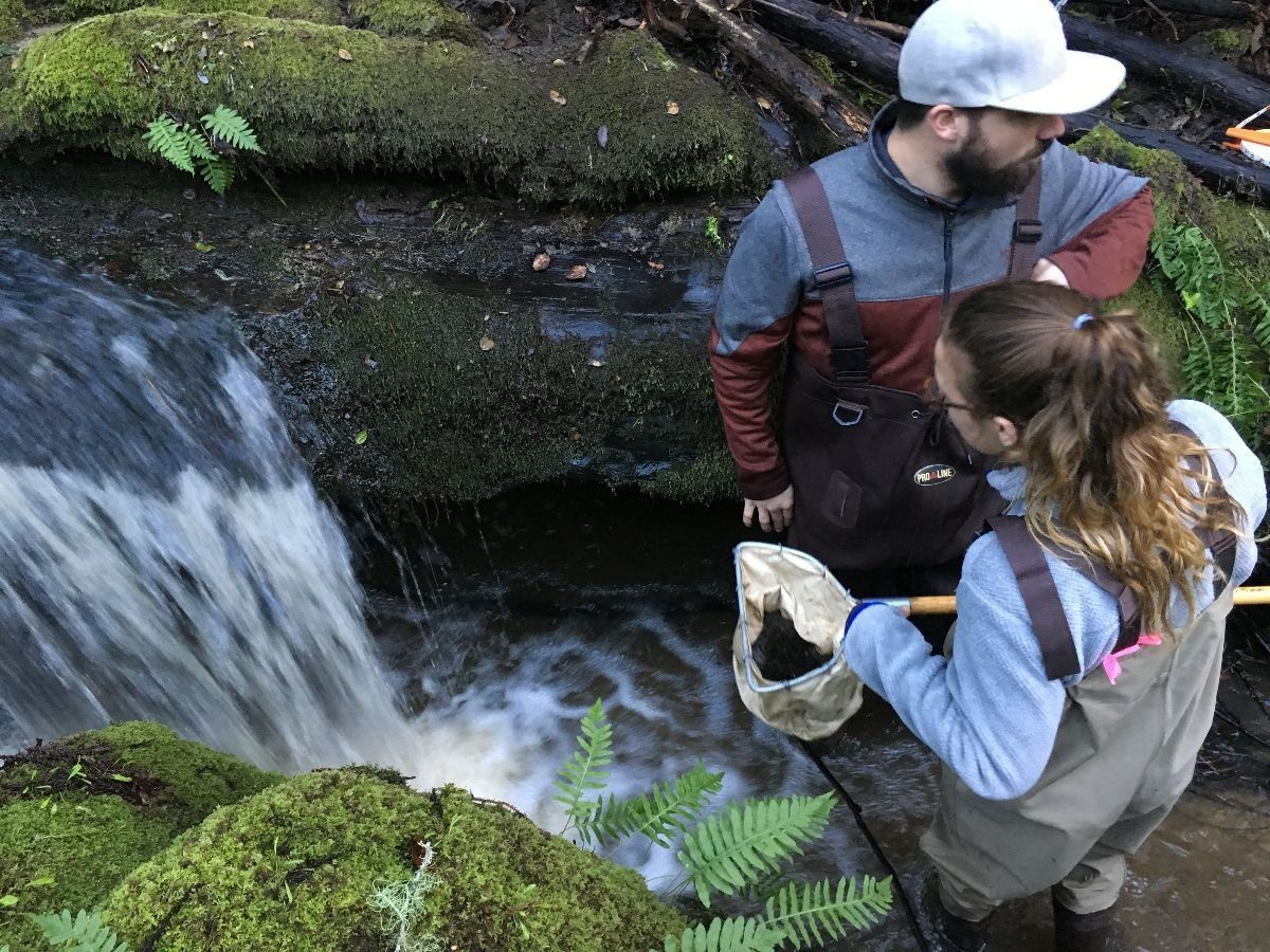 Students collecting samples from a river