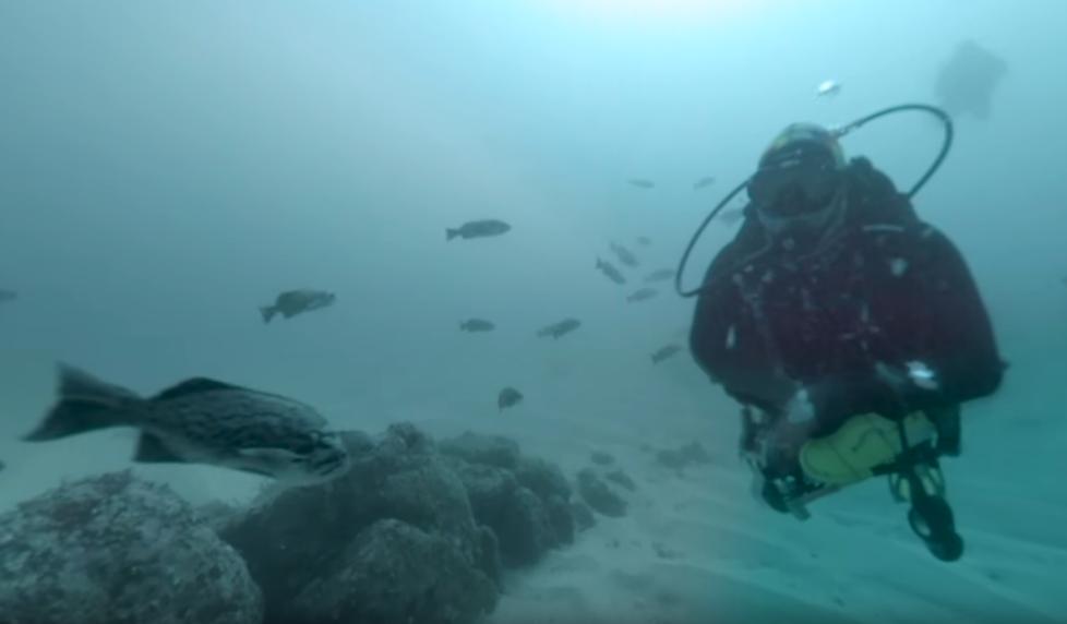 diver in rocky habitat