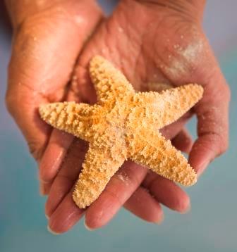 Hands holding seastar